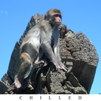 Monkey by served-chilled
