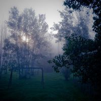 Fog In Morning by netherl