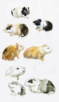 Guinea pig time by Maddepos