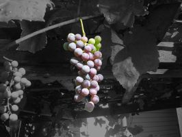 Grapes. by zanderpuss