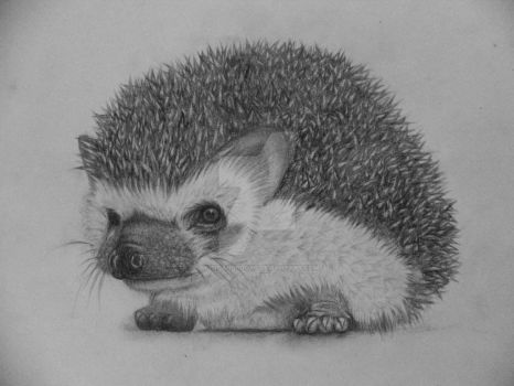Hedgehog by MusicAndBooks