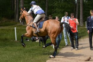 3DE XC Anna Nilsson on Luron by LuDa-Stock