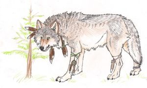 Native wolf by Crazywolfs