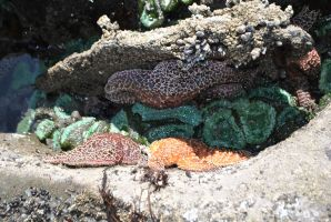 Tide Pools 15 by wolfstockphotos