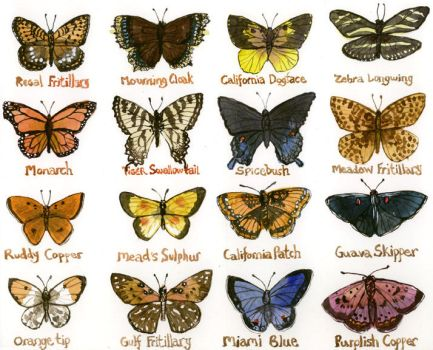 North American Butterflies by Yellowmelle