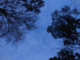 sky through trees by Colliequest