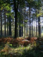 Chaddesley Woods by Spikey-T