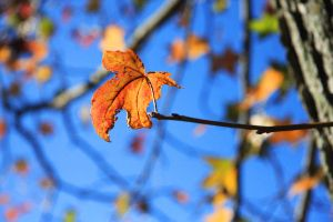 Holding on, Before the Fall by Bella-Kunst
