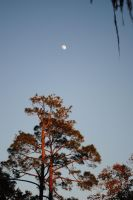 Red Tree Moon by Bawwomick