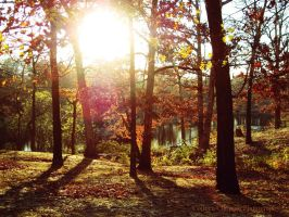Autumn Wallpaper by colleenchiquita