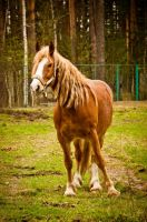 Horse by Gladhnes