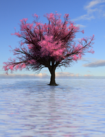 The Ocean Cherry Tree by TomCadogan