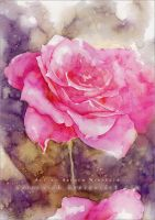 Rose - Watercolor by AuroraWienhold