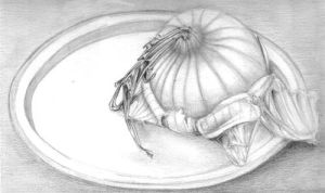 Onion Still Life by jiggly