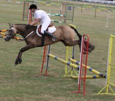 STOCK Showjumping 505 by aussiegal7
