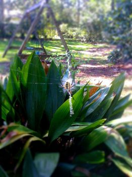 Spider Besider by thelemos