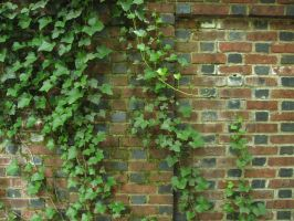 110. Viney Brick Wall by mynti-stock