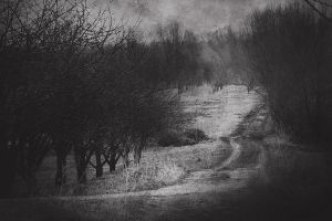the way ... by iwetka