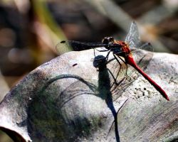 Dragonfly Express by WORSHiTiRESAUCE
