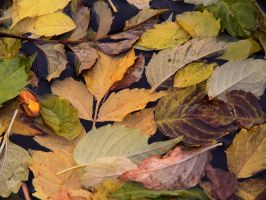 Leaves by bellaricca
