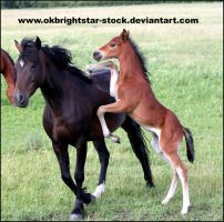 Friendly Mare Foal 15 by okbrightstar-stock