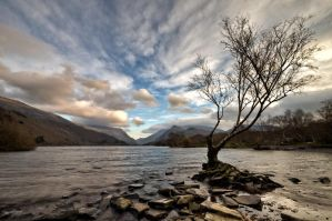 The tree in full by CharmingPhotography