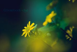 YellowFlowers by Somebody--else