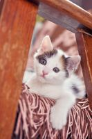 Little cutie by Justysiak