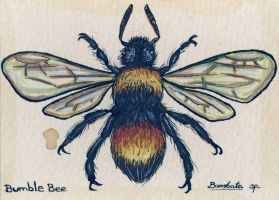 Bumble Bee by feynico