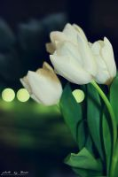 White tulips 71_366 by eugene-dune