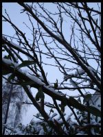 Winter Trees by roundy666