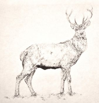 Stag by maysonmonroe