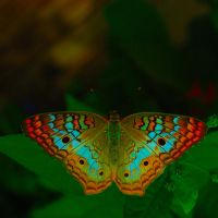 Butterfly View by Jazzhead