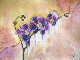 Orchids 29_02_2014 by XThrill