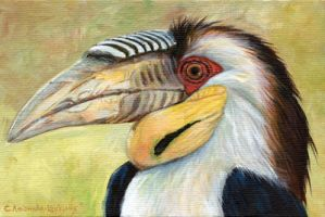 Wreathed Hornbill - acrylic by sschukina