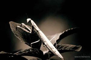 It's a Bugs Life by sjthunder