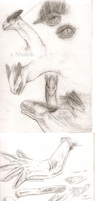 Realistic Lugia skecthes by ShadeofShinon