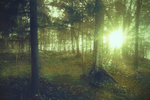 Forest 19 by Amalus