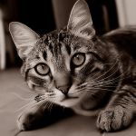 Retard Cat by notoca