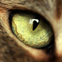 Eye by Lillian-Bann