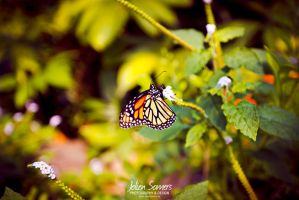 Butterfly close-up 2013 by joolienn