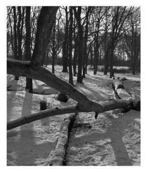 Hainault forest  snow 3 by spurs06