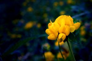 The One Flower by stijn