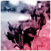 By the light of dawn by werol