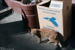 A beggar cat by Lument
