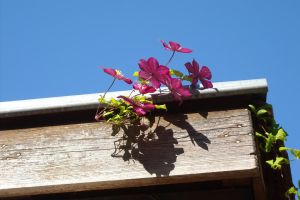 Purple flowers on the roof by TinyWild