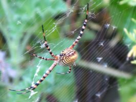 Spider in web series one 03 by teletran