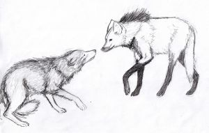 Two wolves by khazwindnafuto