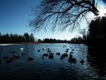 Like Sitting Ducks by deerhunter2012