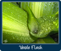 Verde Flash by Tiger-Fenix